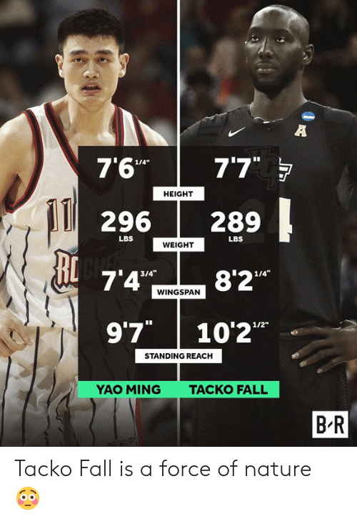 Fall, Yao Ming, and Nature: 7'6"