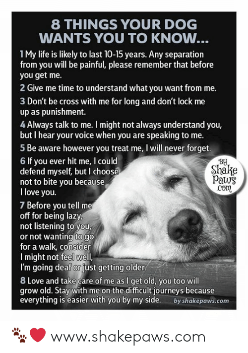 Paws: 8 THINGS YOUR DOG  WANTS YOU TO KNOW...  1My life is likely to last 10-15 years. Any separation  from you will be painful, please remember that before  you get me.  2 Give me time to understand what you want from me.  3 Don't be cross with me for long and don't lock me  up as punishment.  4 Always talk to me. I might not always understand you,  but I hear your voice when you are speaking to me.  5 Be aware however you treat me, I will never forget.  By  Shake  Paws  .com  6 If you ever hit me, I could  defend myself, but I choose  not to bite you because  I love you.  7 Before you tell me  off for being lazy,  not listening to you,  or not wanting to go  for a walk, consider  Imight not feel well,  I'm going deaf or just getting older  8 Love and take care of me as I get old, you too will  grow old. Stay with me on the difficult journeys because  everything is easier with you by my side.  by shakepaws.com 🐾❤️ www.shakepaws.com