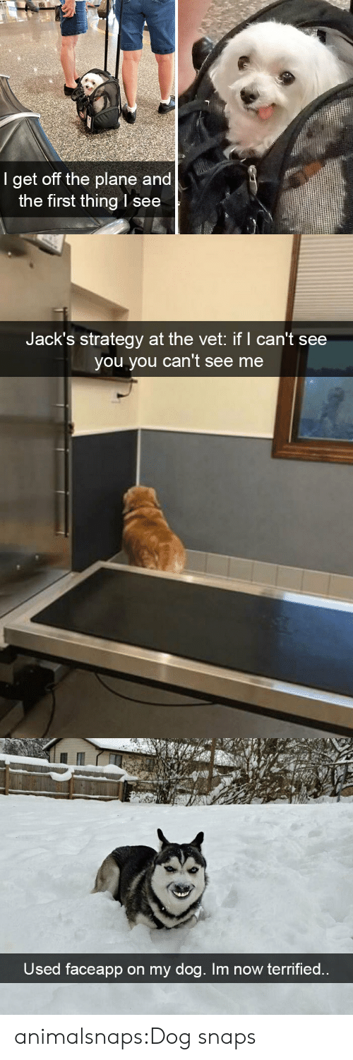 Target, Tumblr, and Blog: 84  I get off the plane and  the first thing l see   Jack's strategy at the vet: if I can't see  you you can't see me   Used faceapp on my dog. Im now terrified.. animalsnaps:Dog snaps