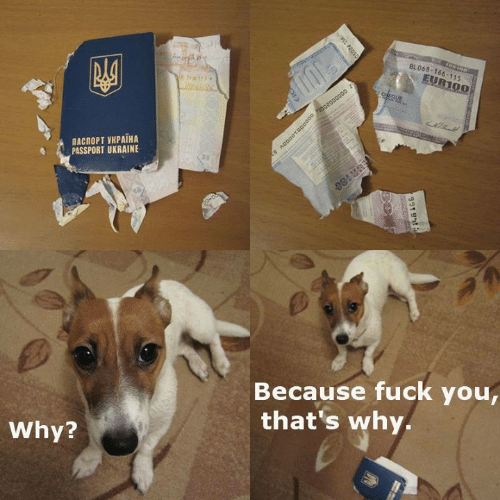 Fuck You Thats Why: 8LO68-166 115  EUR100  ПАСПОРТ УКРАНА  PASSPORT UKRAINE  Because fuck you  that's why  Why?