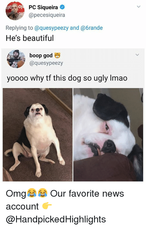 Beautiful, Memes, and News: 90PC Siqueira  @pecesiqueira  Replying to@quesypeezy and @6rande  He's beautiful  boop go  @quesypeezy  yooo0 why tf this dog so ugly Imao Omg😂😂 Our favorite news account 👉 @HandpickedHighlights