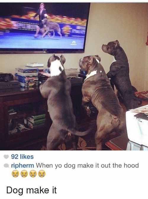 The Hood, Yo, and Hood: 92 likes  ripherm When yo dog make it out the hood Dog make it