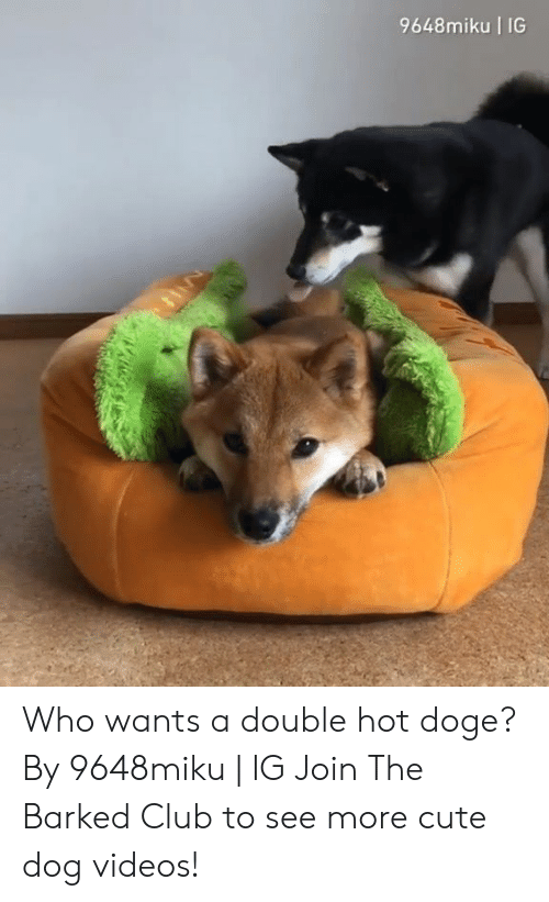 cute dog: 9648miku IG  La Who wants a double hot doge? By 9648miku | IG  Join The Barked Club to see more cute dog videos!