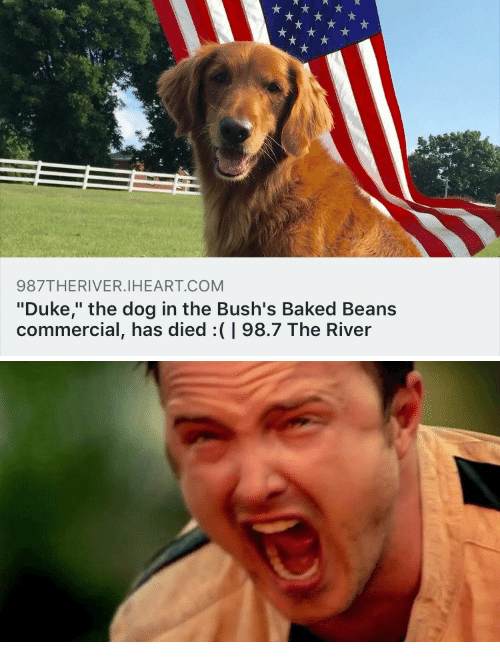 """baked beans: 987THERIVER.IHEART.COM  """"Duke,"""" the dog in the Bush's Baked Beans  commercial, has died:(