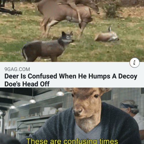 9gag, Confused, and Deer: 9GAG.COM  Deer Is Confused When He Humps A Decoy  Doe's Head Off  These are confusing times