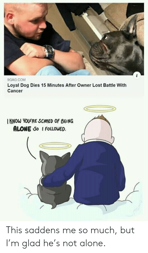 loyal: 9GAG COM  Loyal Dog Dies 15 Minutes After Owner Lost Battle With  Cancer  KNOW YOU'RE SCARED OF BEING  ALONE So I FOLLOWED This saddens me so much, but I'm glad he's not alone.