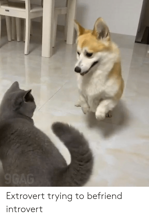 9gag, Dank, and Introvert: 9GAG Extrovert trying to befriend introvert