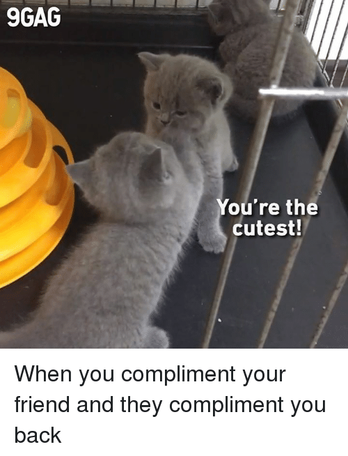 9gag, Dank, and Back: 9GAG  You're the  cutest! When you compliment your friend and they compliment you back