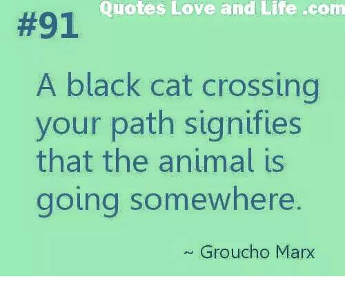 quotes love: Quotes Love and Life -com  #91  A black cat crossing  your path signifies  that the animal is  going somewhere.  Groucho Marx