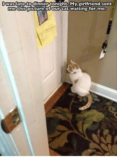 Tonight My Girlfriend: was late to dinner tonight. My girlfriend sent  me this picture of our cat waiting for me.