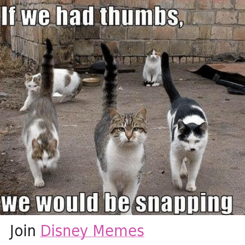 disney memes: If we had thumbsn  we would be snapping Join Disney Memes