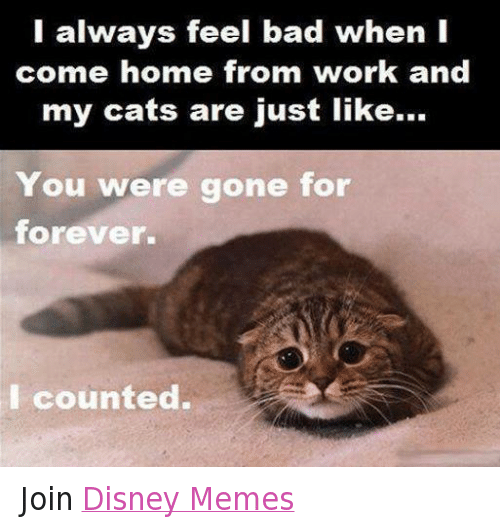 disney memes: I always feel bad when I  come home from work and  my cats are just like...  You were gone for  forever.  counted. Join Disney Memes