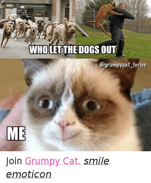 Grumpy Cat Lyrics