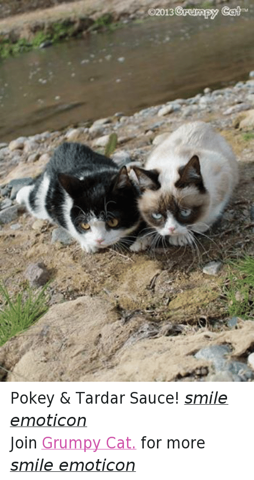 Cats, Grumpy Cat, and Smile: CO2013  Grumpy Caih Pokey & Tardar Sauce! smile emoticon Join Grumpy Cat. for more smile emoticon