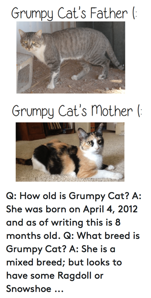Grumpy Cat's Father Grumpy Cat's Mother Q How Old Is ...