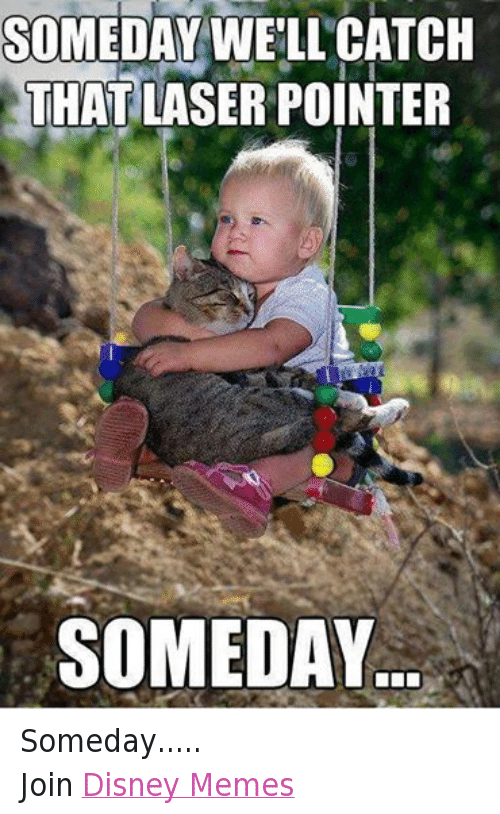 disney memes: SOMEDAY WELL CATCH  THAT LASER POINTER  SOMEDAY Someday..... Join Disney Memes
