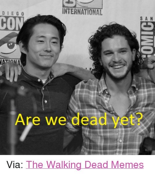the walking dead memes: INTERNATIONAL  DIE GO  S A N  CON  NATT  Are we dead vet? Via: The Walking Dead Memes