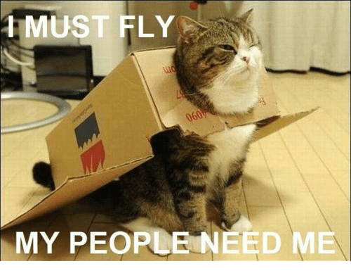 My People Need Me: 1 MUST FLY  MY PEOPLE NEED ME