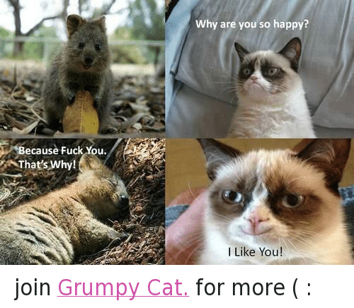 Fuck You Thats Why: ecause Fuck You.  That's Why!  Why are you so happy?  I Like You join Grumpy Cat. for more  ( :