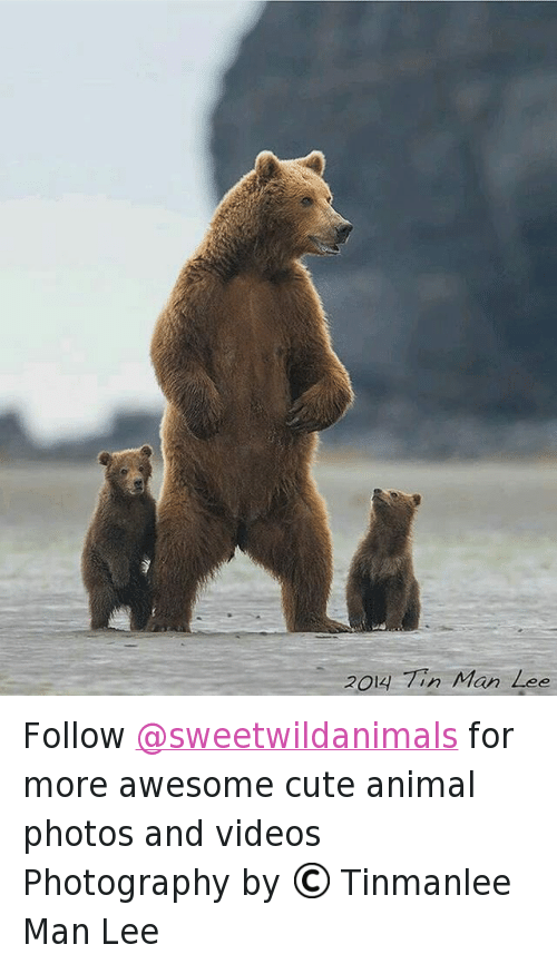 animated photos: 2O4-77, Mരn Zഭ് Follow @sweetwildanimals for more awesome cute animal photos and videos -Photography by © Tinmanlee Man Lee