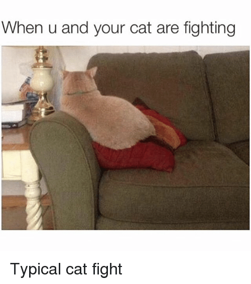 cat fighting: When u and your cat are fighting Typical cat fight