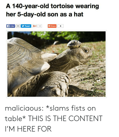 tortoise: A 140-year-old tortoise wearing  her 5-day-old son as a hat  Like  Tweet  G+1 0  Share  iu maliciaous:  *slams fists on table* THIS IS THE CONTENT I'M HERE FOR