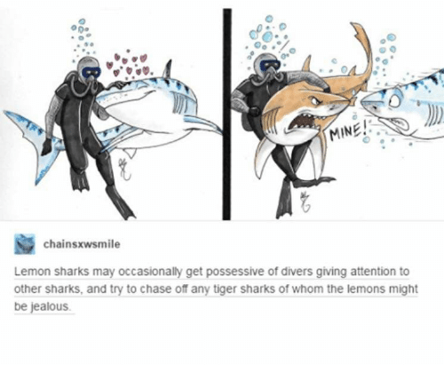 Jealous, Chase, and Sharks: a 50  MINE!  chainsxwsmile  Lemon sharks may occasionally get possessive of divers giving attention to  other sharks, and try to chase off any tiger sharks of whom the lemons might  be jealous.
