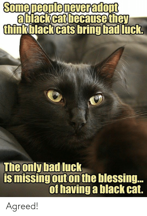 Bad, Memes, and Black: a black cat because they  thinkblackcats bring bad  luck  The only bad luck  is missingouton the blessing..  of havinga black cat. Agreed!