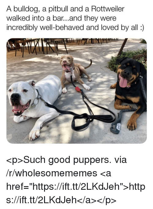 """Pitbull, Bulldog, and Good: A bulldog, a pitbull and a Rottweiller  walked into a bar...and they were  incredibly well-behaved and loved by all) <p>Such good puppers. via /r/wholesomememes <a href=""""https://ift.tt/2LKdJeh"""">https://ift.tt/2LKdJeh</a></p>"""