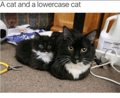 Memes, 🤖, and Cat: A cat and a lowercase cat