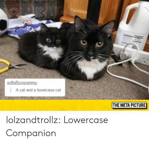 Tumblr, Blog, and Http: A cat and a lowercase cat  THE META PICTURE lolzandtrollz:  Lowercase Companion