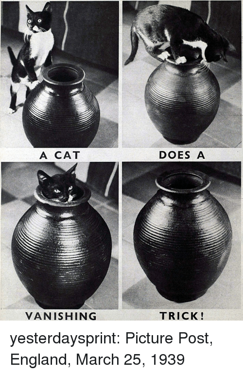 Vanishing: A CAT  DOES A  VANISHING  TRICK! yesterdaysprint:  Picture Post, England, March 25, 1939