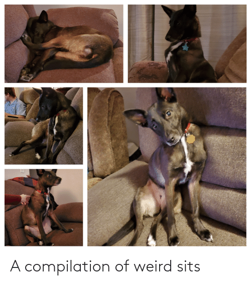 compilation: A compilation of weird sits