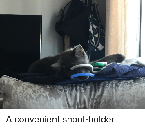 Snoot, Convenient, and Holder: A convenient snoot-holder