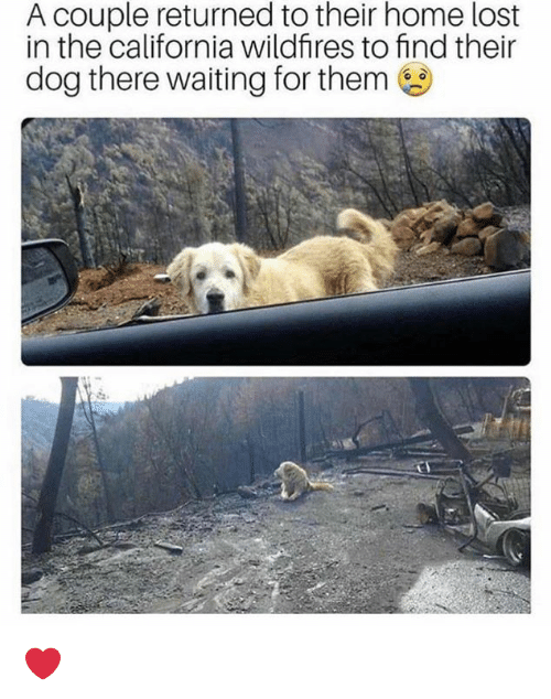 Memes, Lost, and California: A couple returned to their home lost  in the california wildfires to find their  dog there waiting for them ❤️