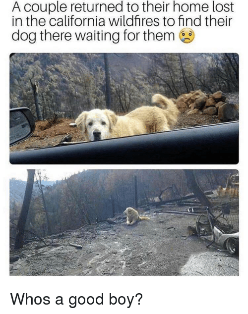 Lost, California, and Good: A couple returned to their home lost  in the california wildfires to find their  dog there waiting for them Whos a good boy?
