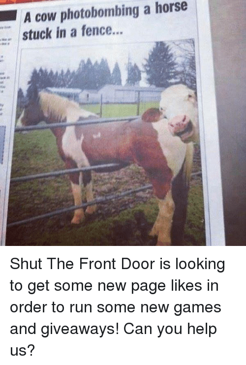 fencing: A cow photobombing a horse  stuck in a fence... Shut The Front Door is looking to get some new page likes in order to run some new games and giveaways!  Can you help us?