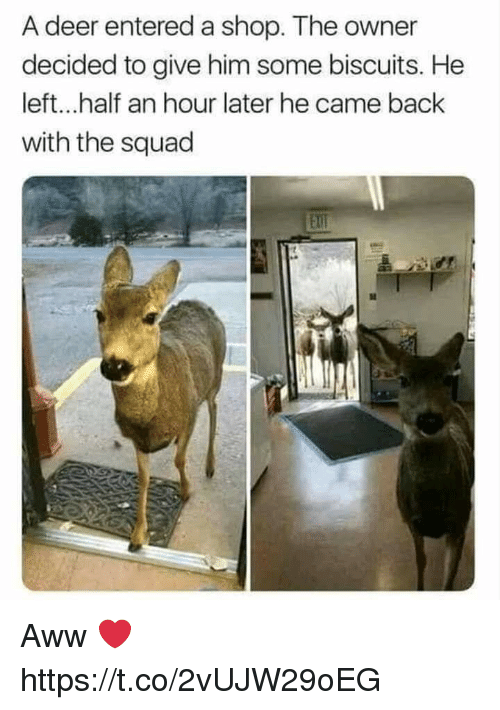 half an hour: A deer entered a shop. The owner  decided to give him some biscuits. He  left...half an hour later he came back  with the squad  Ell Aww ❤ https://t.co/2vUJW29oEG
