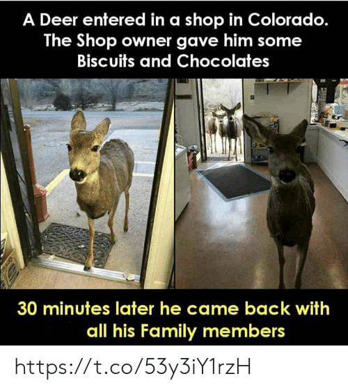 came back: A Deer entered in a shop in Colorado.  The Shop owner gave him some  Biscuits and Chocolates  30 minutes later he came back with  all his Family members https://t.co/53y3iY1rzH