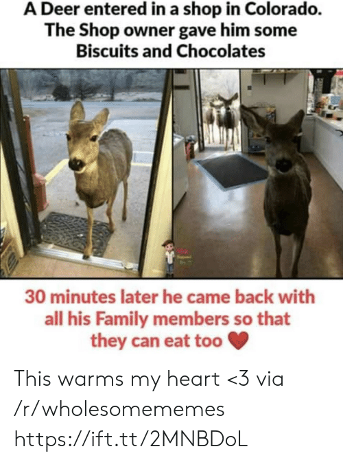 biscuits: A Deer entered in a shop in Colorado.  The Shop owner gave him some  Biscuits and Chocolates  30 minutes later he came back with  all his Family members so that  they can eat too This warms my heart <3 via /r/wholesomememes https://ift.tt/2MNBDoL