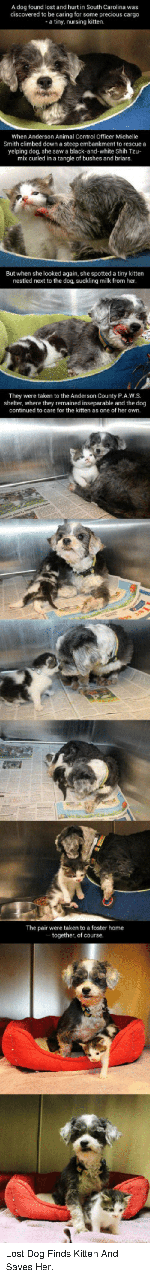 Precious, Saw, and Taken: A dog found lost and hurt in South Carolina was  discovered to be caring for some precious cargo  a tiny, nursing kitten.  When Anderson Animal Control Officer Michelle  Smith climbed down a steep embankment to rescue a  yelping dog, she saw a black-and-white Shih Tzu-  mix curled in a tangle of bushes and briars  But when she looked again, she spotted a tiny kitten  nestled next to the dog, suckling milk from her  They were taken to the Anderson County P.A.W.S.  shelter, where they remained  inseparable and the dog  continued to care for the kitten as one of her own.  The pair were taken to a foster home  - together, of course. <p>Lost Dog Finds Kitten And Saves Her.</p>
