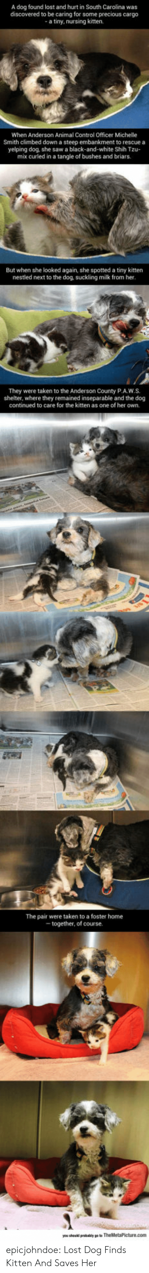 Nursing: A dog found lost and hurt in South Carolina was  discovered to be caring for some precious cargo  a tiny, nursing kitten.  When Anderson Animal Control Officer Michelle  Smith climbed down a steep embankment to rescue a  yelping dog, she saw a black-and-white Shih Tzu-  mix curled in a tangle of bushes and briars.  But when she looked again, she spotted a tiny kitten  nestled next to the dog, suckling milk from her  They were taken to the Anderson County P.A.W.S.  shelter, where they remained inseparable and the dog  continued to care for the kitten as one of her own.  The pair were taken to a foster home  together, of course epicjohndoe:  Lost Dog Finds Kitten And Saves Her