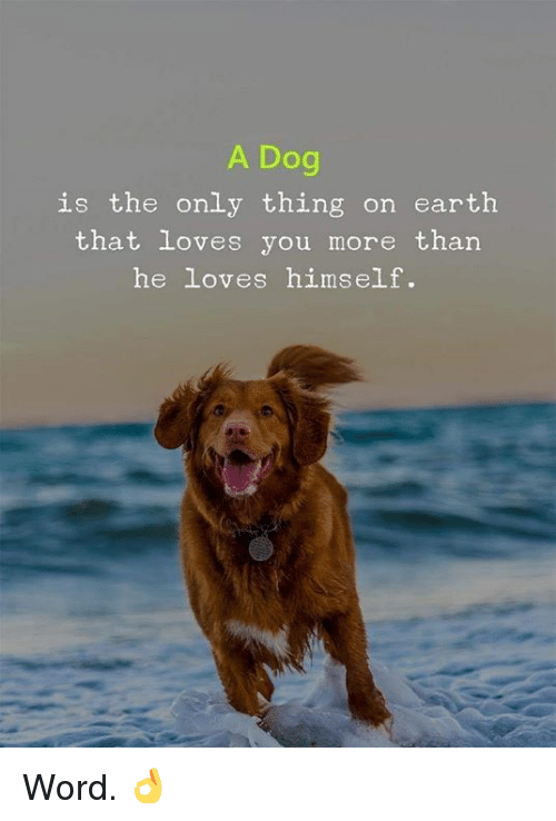 Memes, Earth, and Word: A Dog  is the only thing on earth  that loves you more than  he loves himself. Word. 👌