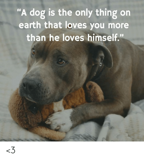 "Memes, Earth, and 🤖: ""A dog is the only thing on  earth that loves you more  than he loves himself."" <3"