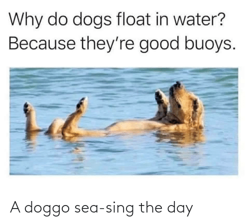 sea: A doggo sea-sing the day