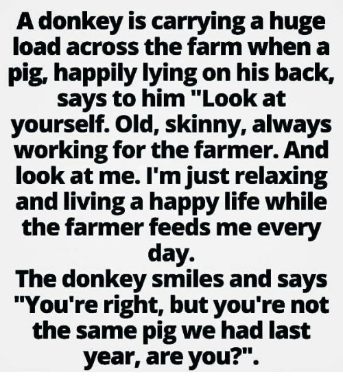 "Donkey, Life, and Memes: A donkey is carrying a huge  load across the farm when a  pig, happily lying on his back,  says to him ""Look at  yourself. Old, skinny, always  working for the farmer. And  look at me. l'm just relaxing  and living a happy life while  the farmer feeds me every  day.  The donkey smiles and says  ""You're right, but you're not  the same pig we had last  year, are you?"""