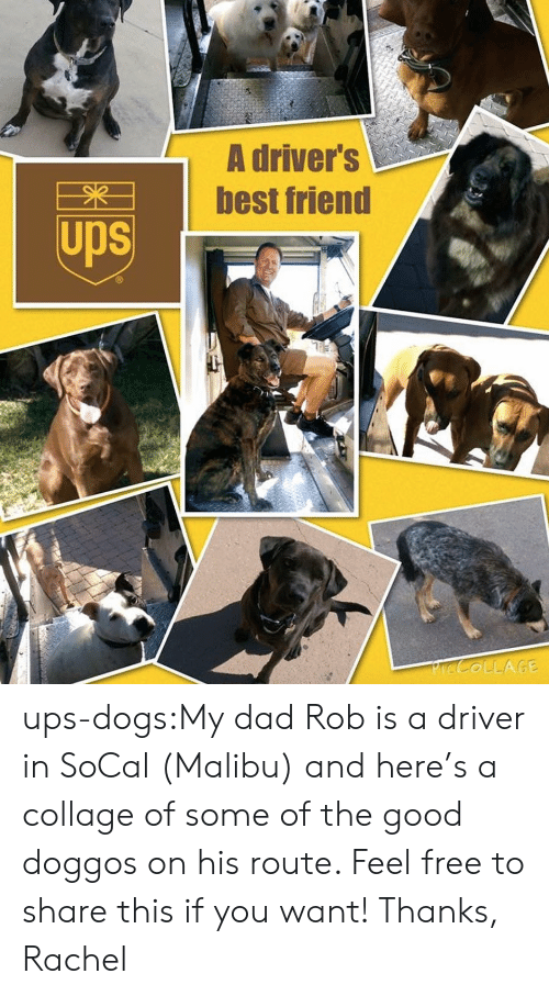 Best Friend, Dad, and Dogs: A driver's  best friend  Ups ups-dogs:My dad Rob is a driver in SoCal (Malibu) and here's a collage of some of the good doggos on his route. Feel free to share this if you want! Thanks, Rachel