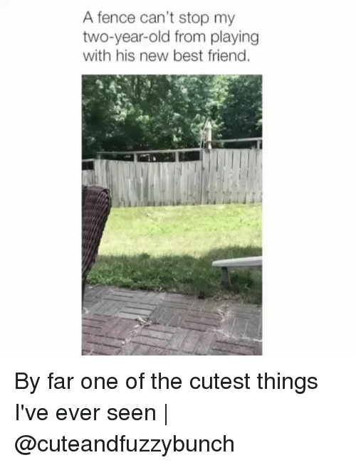 Best Friend, Memes, and Best: A fence can't stop my  two-year-old from playing  with his new best friend. By far one of the cutest things I've ever seen | @cuteandfuzzybunch