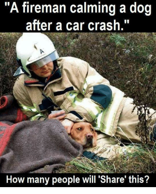"""Car Crashing: """"A fireman calming a dog  after a car crash.""""  How many people will Share this?"""