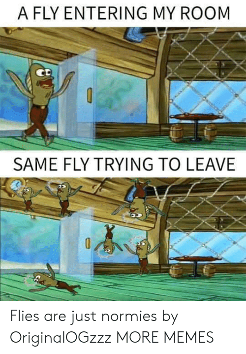 Dank, Memes, and Target: A FLY ENTERING MY ROOM  SAME FLY TRYING TO LEAVE Flies are just normies by OriginalOGzzz MORE MEMES